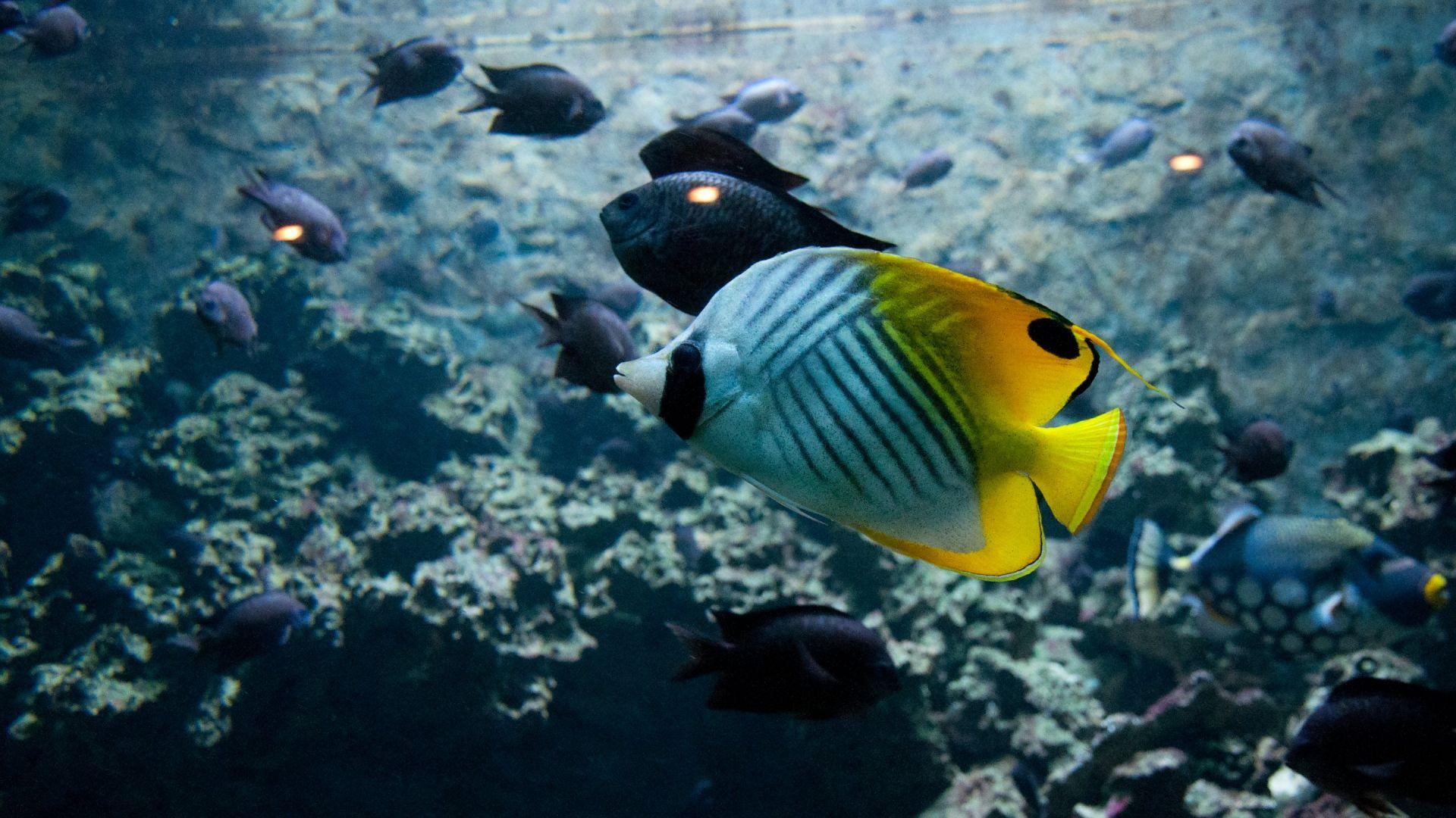 Wallpaper Tropical beautiful fish