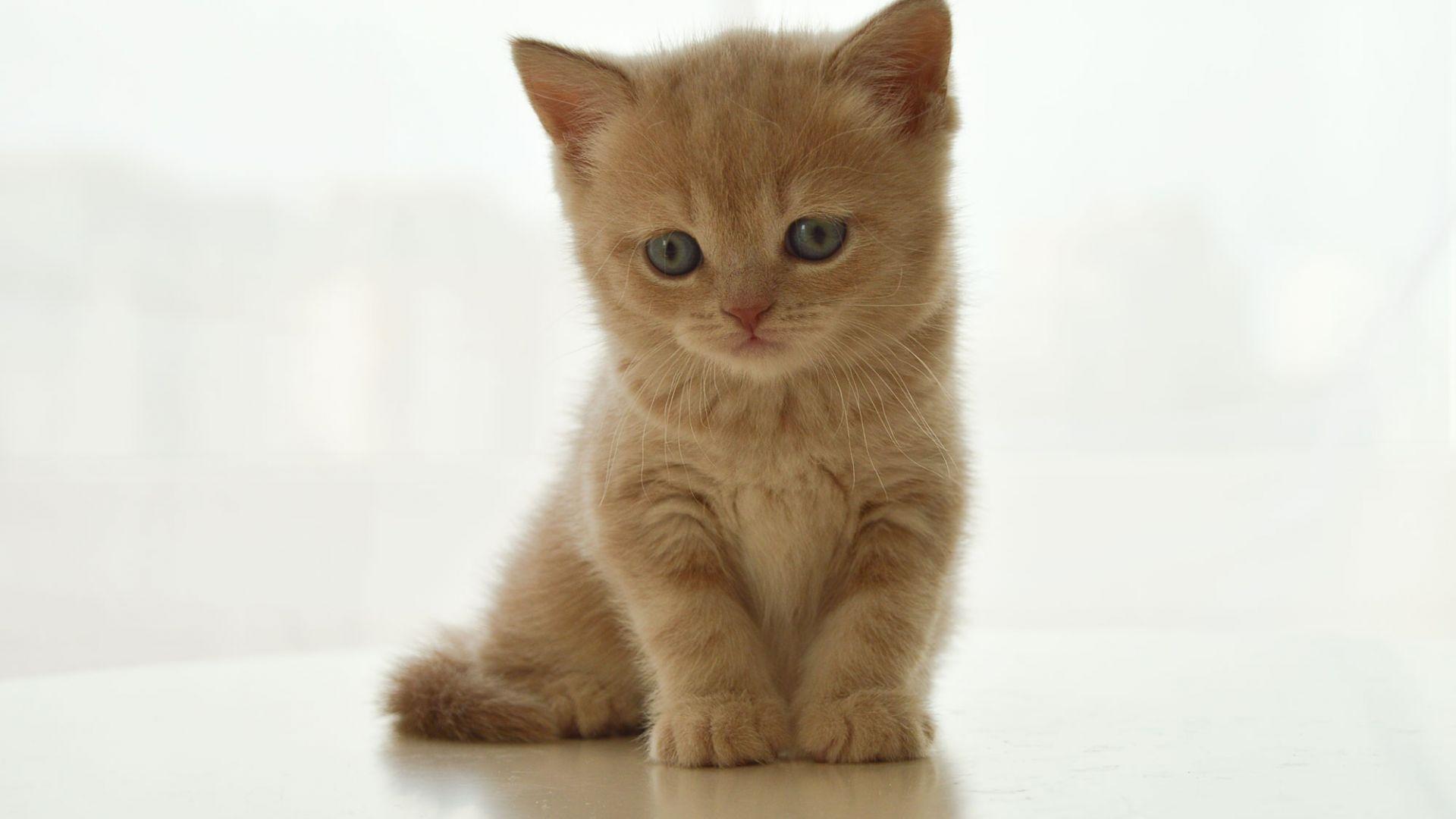 Desktop Wallpaper Cute Baby Cat Kitten Sitting Pet Hd Image Picture Background L8y5jl