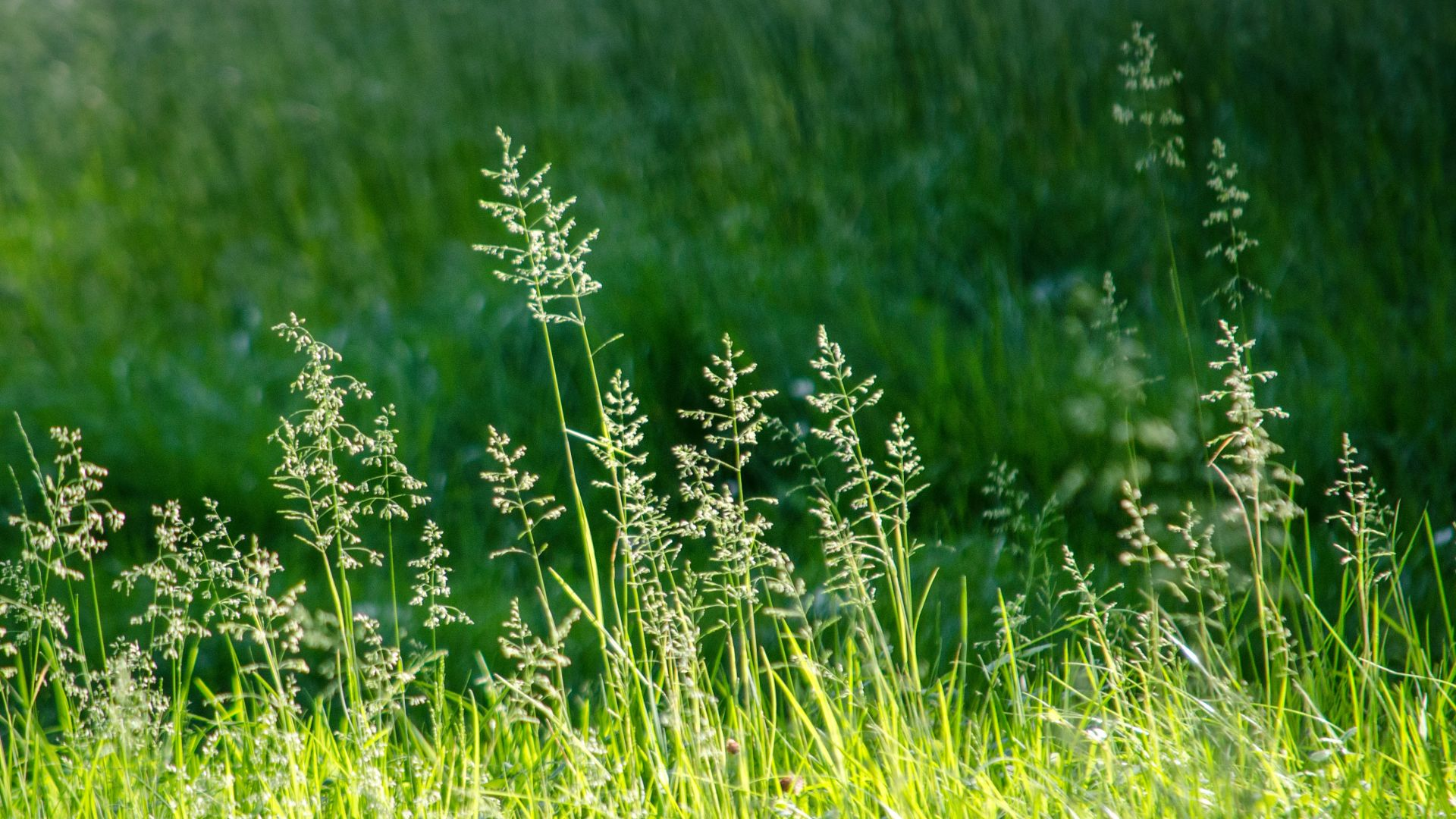 Wallpaper Meadow, grass, plants, nature