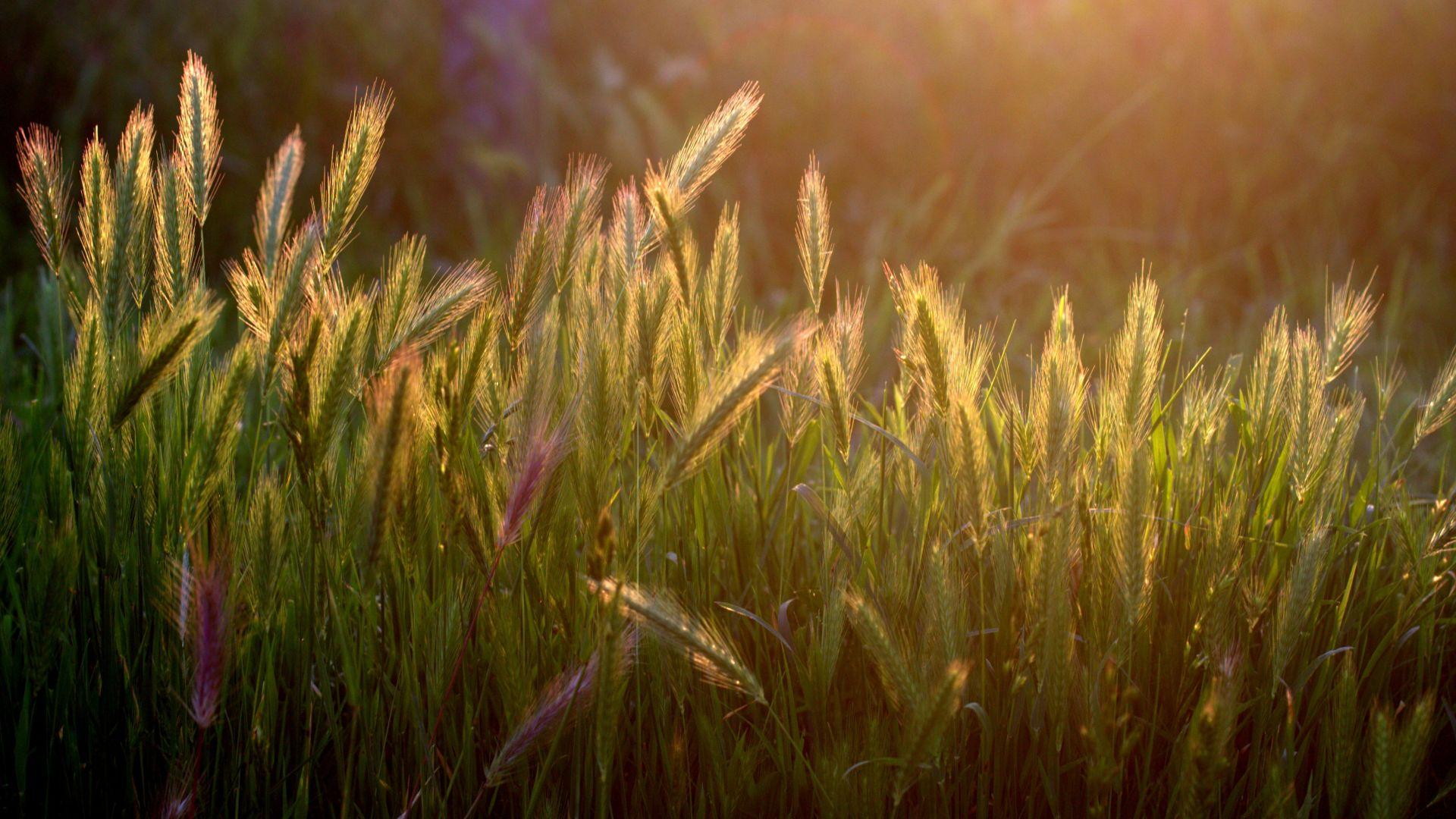 Wallpaper Farm, sunrise, plants, nature