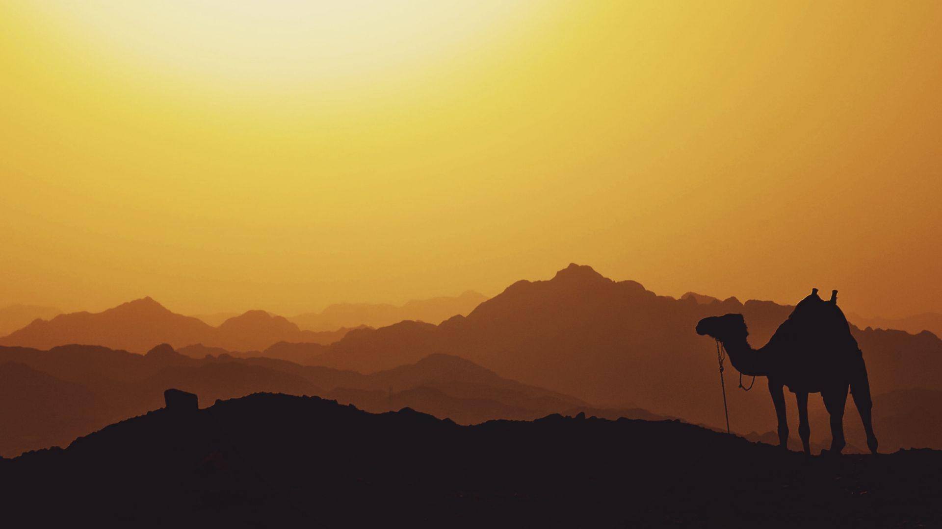 Wallpaper Camel, animal, mountains, sunset, horizon