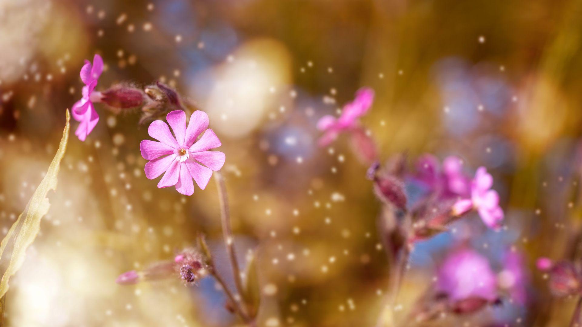 Wallpaper Glitters, pink flowers, blur