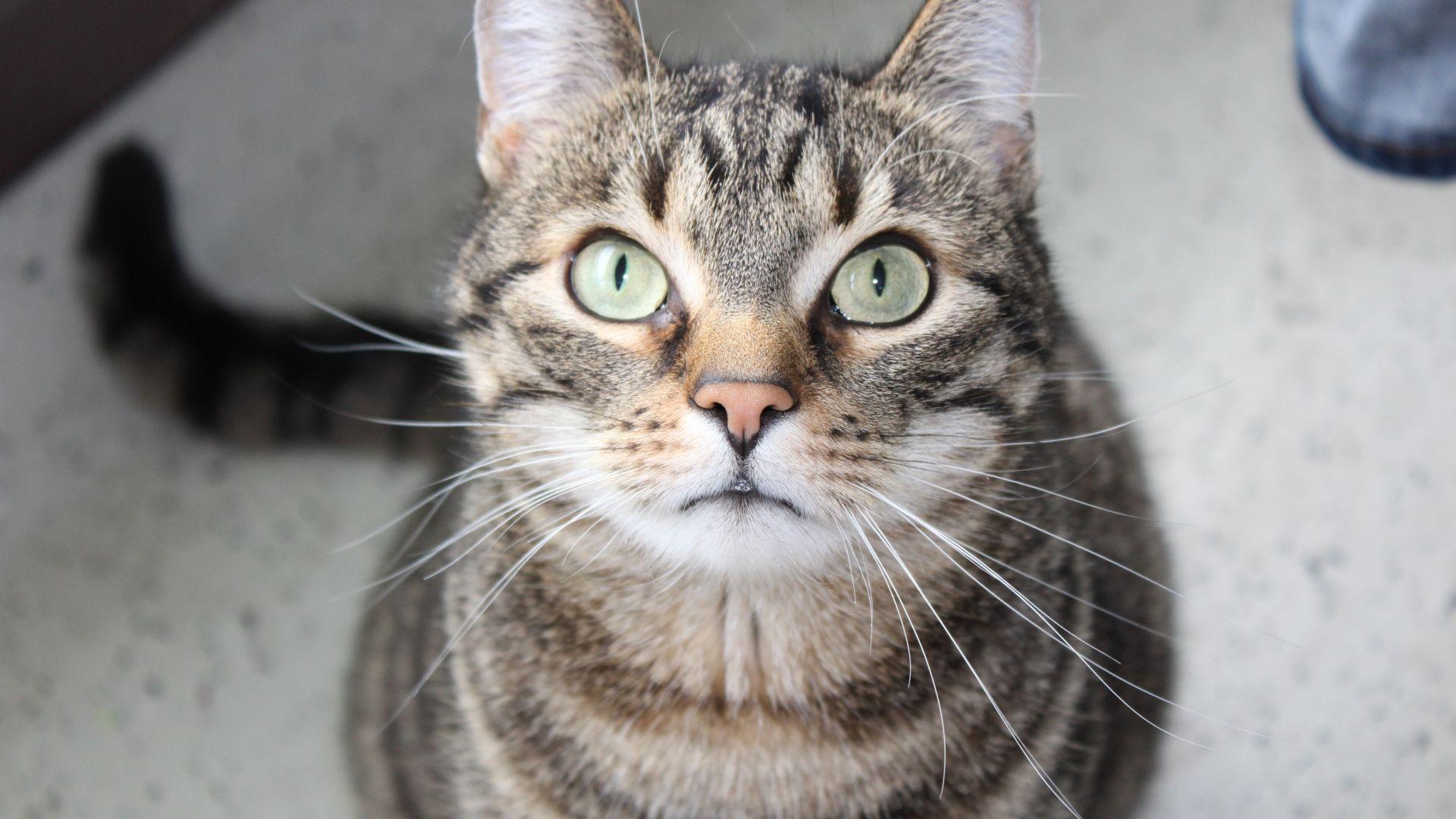 Wallpaper Curious cat, stare, pet animal