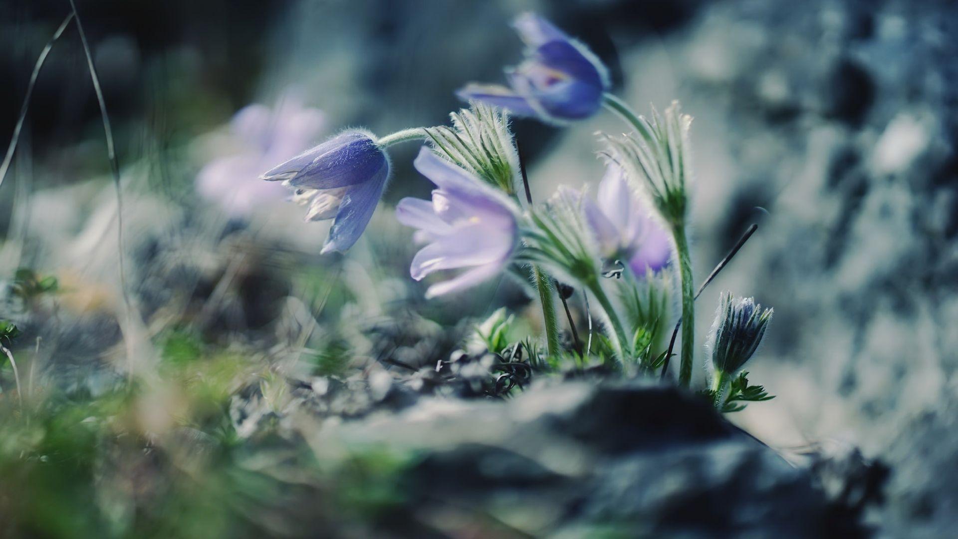 Wallpaper Beautiful, small purple, wild flowers, blur