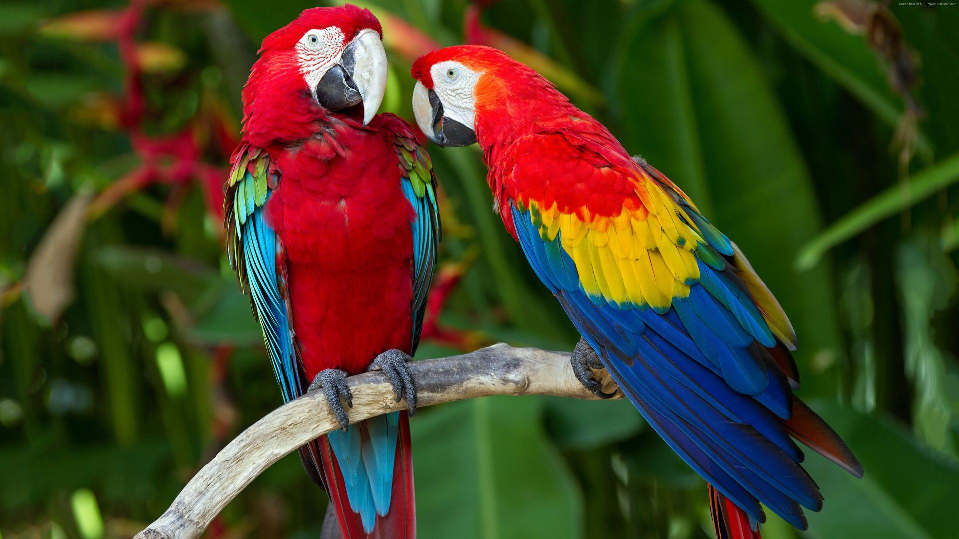 Wallpaper Macaw Parrot birds, sitting, branch