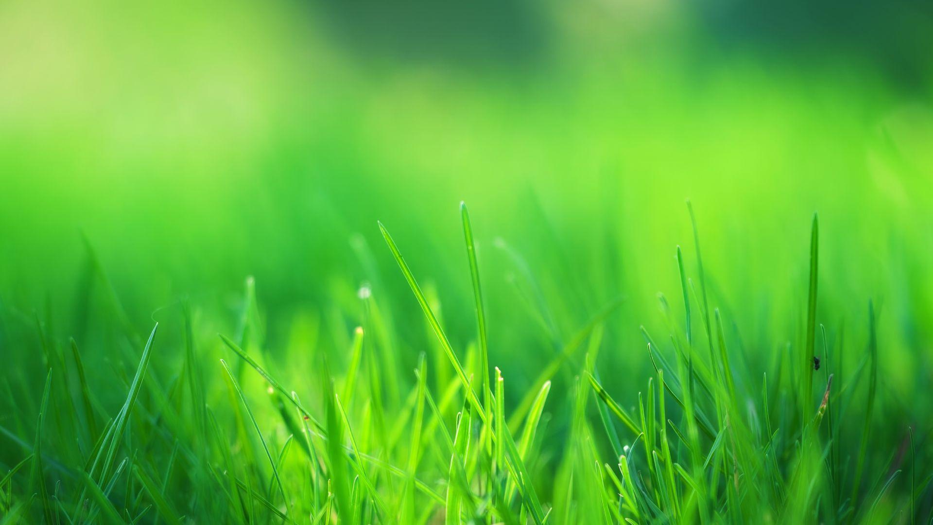 Wallpaper Nature, landscape, green grass, threads, close up