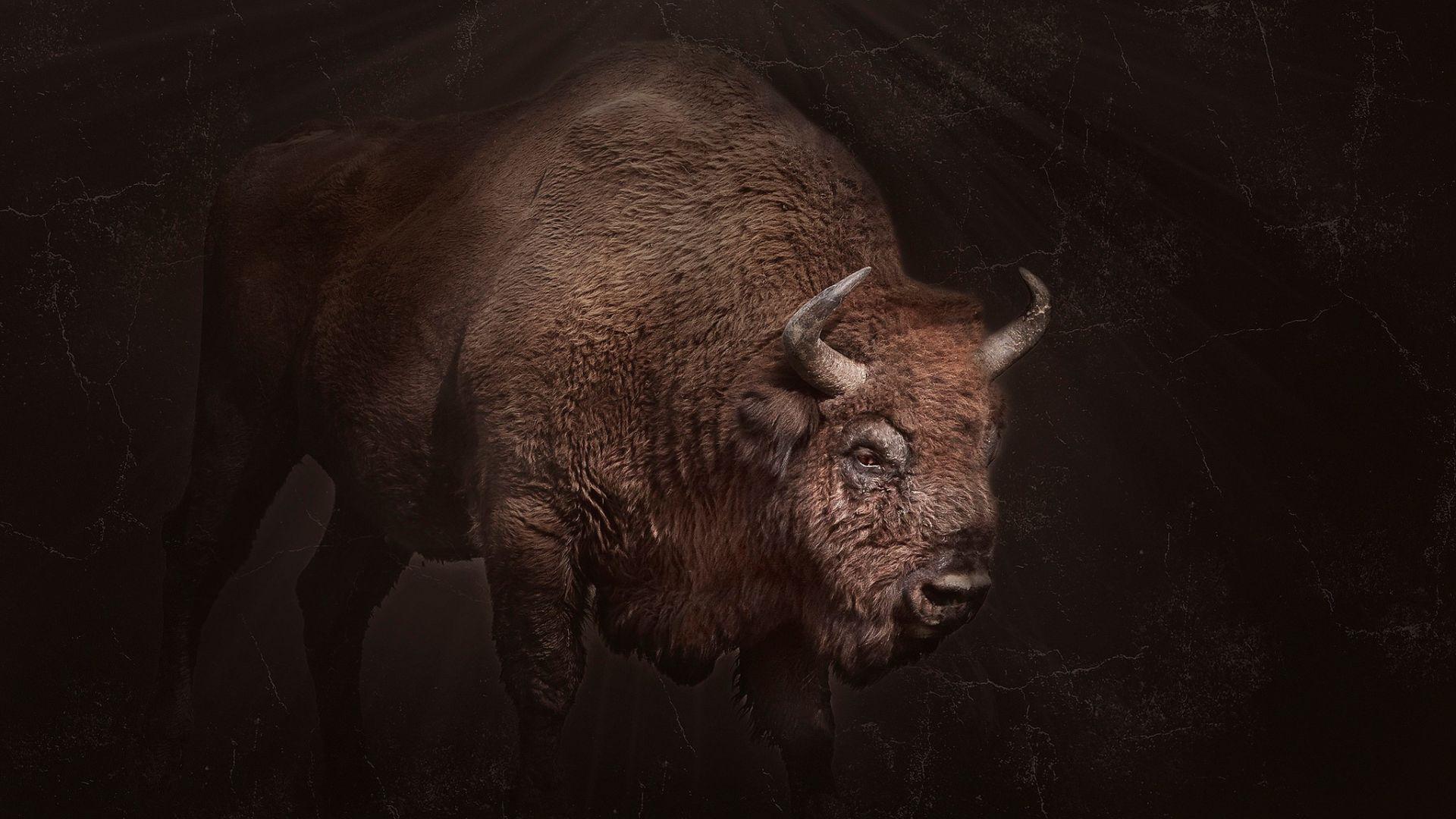 Wallpaper Bison animal, dark, horns