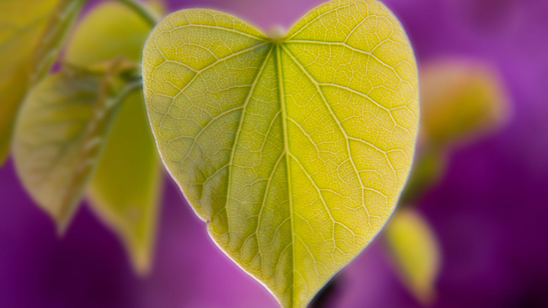Wallpaper Green leaf, heart shape, macro