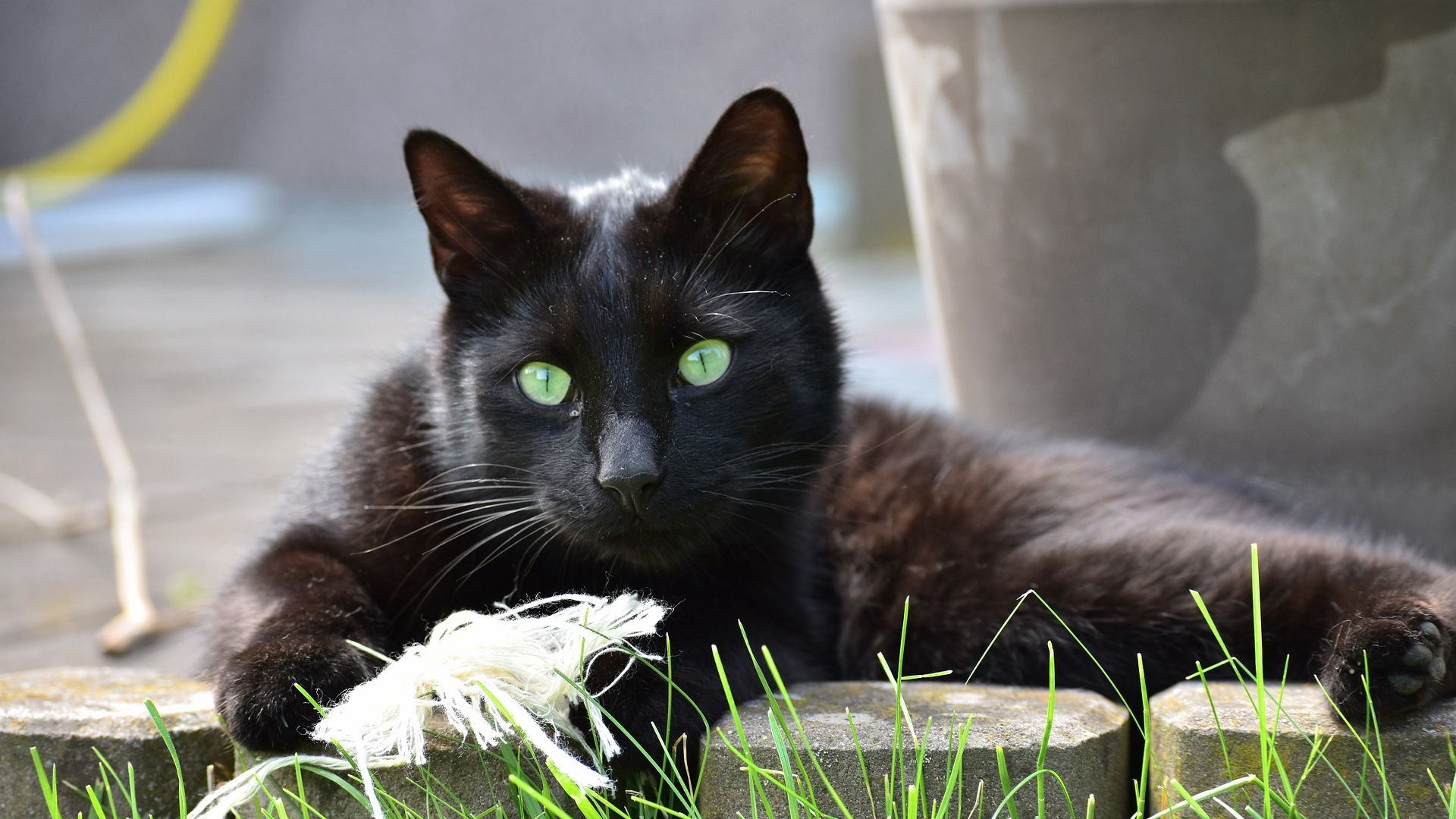 Wallpaper Black cat, sit, green eyes