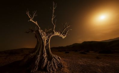 Dried tree in night