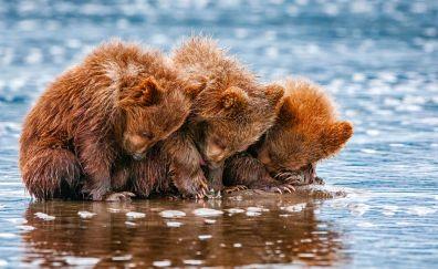 Baby bears, wild animals, sitting