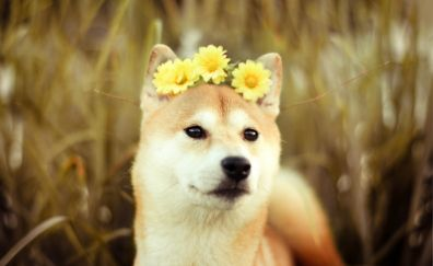 Dog muzzle with flower crown