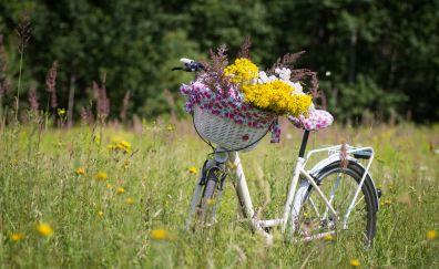 Meadow, bicycle, flowers, basket, plants