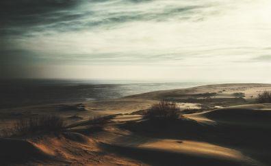 Dunes, sand, plants, desert, nature