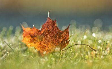 Close up, leaf, green grass