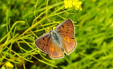 Close up, butterfly, insect