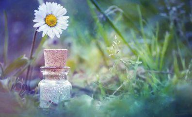 Daisy, white flower, bottle, grass