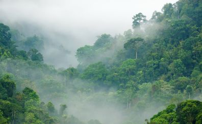 Green forest, tree, mist, nature