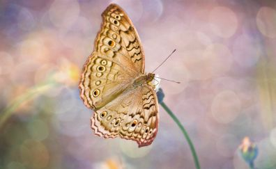 Butterfly, close up, insect, bokeh