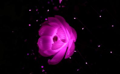 Pink, lotus, flower, glow, abstraction