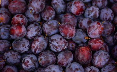 Plums, fruits, 5k