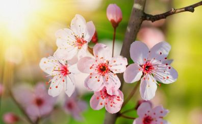 Cute little sakura flowers