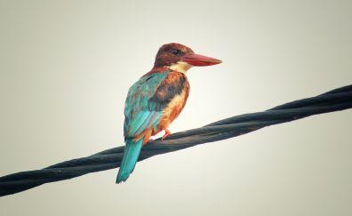 Kingfisher, bird, calm, colorful