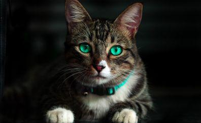 Cat, green eyes, animal, muzzle, 4k