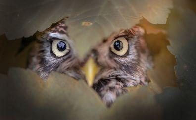 Owl behind leaves, predator, eyes, close up