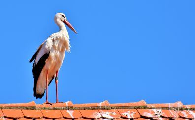 Stork, big, water bird, animal, terrace