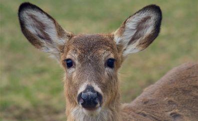 Deer muzzle, cute animal, wildlife