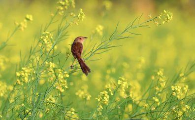 Meadow, plants, cute, small birds, 4k