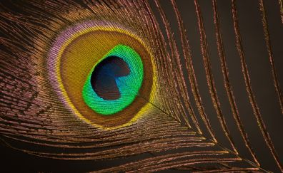 Colorful feather, close up, 5k