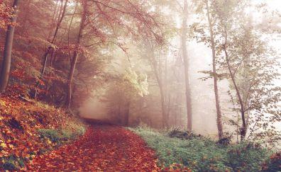 Autumn, park, forest, path, foliage, 4k