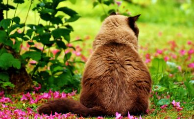 British shorthair, sitting, flowers, meadow