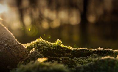 Forest, bokeh, moss, 5k