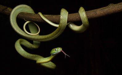 Green reptile, snake, hang