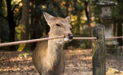 Cute deer animal