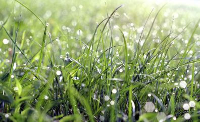 Morning, dew drops, grass, bokeh