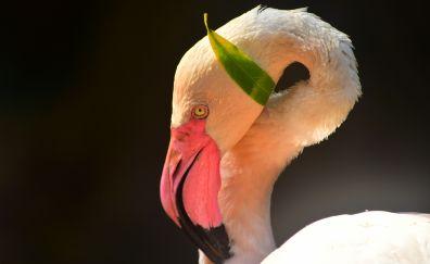 Pink bird, flamingo, muzzle, beak