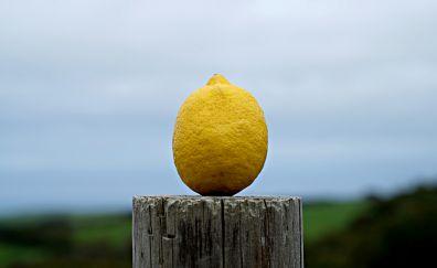 Lemon, yellow, freshness, fruit, 4k