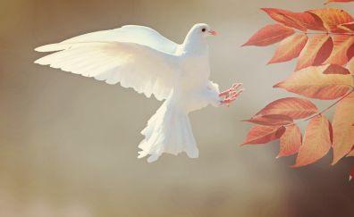 White, dove, flying, leaves, wings