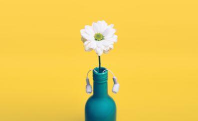 Daisy flower, bottle, headphone