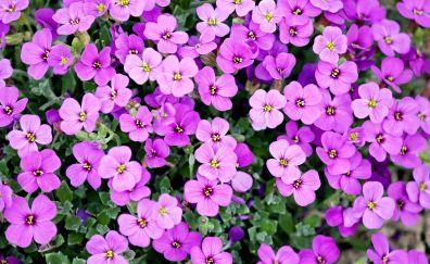 Pink flowers, spring, garden, 4k