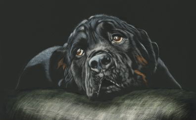 Black, Rottweiler, dog, muzzle, cushion