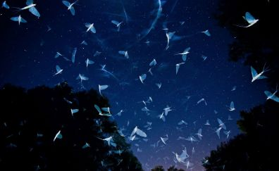 White insects in night