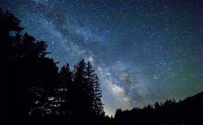 Night, milky way, stars, nature, trees, 5k