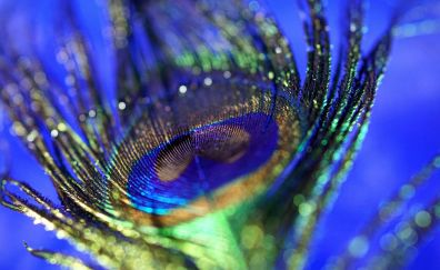 Peacock, plumage, feather, colorful, bokeh, close up, 5k