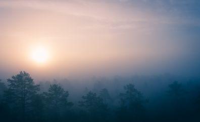 Sunrise, mist, fog, forest, tree