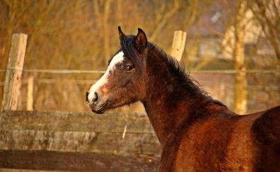 Baby horse muzzle, animal